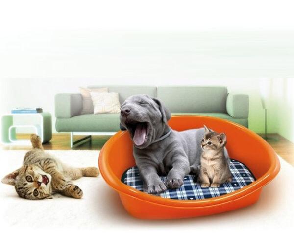 Zašto je psu potreban krevet